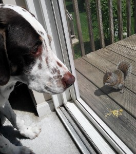 Being a good boy.  After all, the squirrel did get there first.